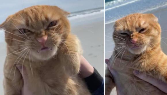 La singular reacción del gato, al estar por primera vez en la playa, dio la vuelta al mundo. (Foto: Pumpkin the Cat / Facebook)
