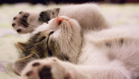 El felino fue aseado al interior de un lavadero. (Foto referencial - Pexels)
