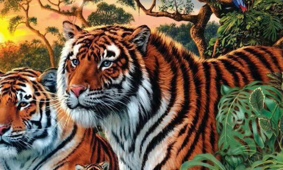 Desafío visual: adivina cuántos tigres en toda la imagen en el menor tiempo posible. (Foto: Facebook)