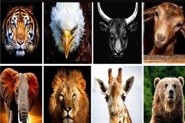 Elige el animal que más te llama tu atención y así conocerás los resultados.   Foto: genial.guru