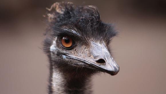 Una de las aves se emocionó demasiado con los bocaditos ofrecidos. (Foto referencial - Pexels)