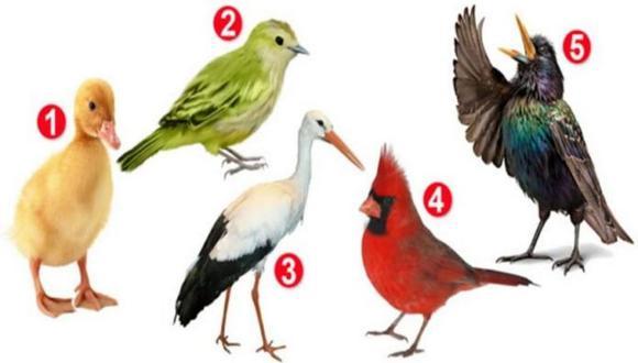 Mira la imagen del test viral de los pájaros, elige una y conoce lo más asertivo de tu personalidad. (Mdzol)