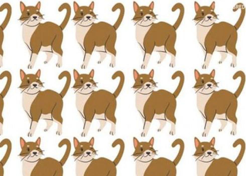 Revisa este gráfica no convencional de los gatos y encuentra al pez entre ellos. (Facebook)