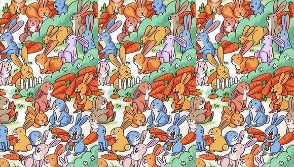 Reto viral: Observa con atención y encuentra al conejo con cono naranja en lugar de zanahoria.