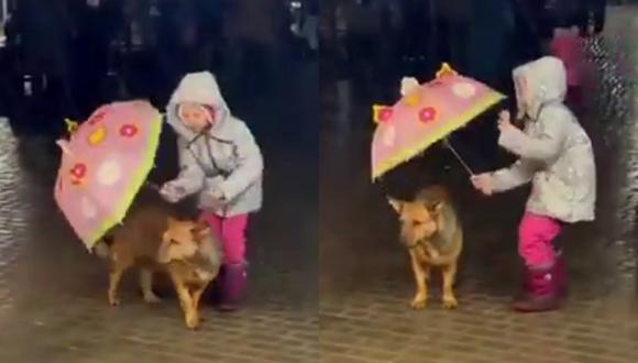Un video viral muestra el acto de bondad de una niña al proteger de la lluvia a un perro con su paraguas. | Crédito: @susantananda3 / Twitter