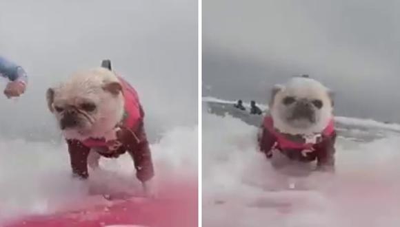 El video del animal fue blanco de no pocos comentarios. (Foto: RM Videos | YouTube)