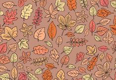 Solo tienes 15 segundos: ubica al sapo escondido entre las hojas en este acertijo visual