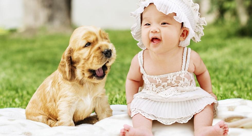 Un perro sorprendió a propios y extraños al hablar antes que un bebé. (Fotos: Pixabay/Referencial)