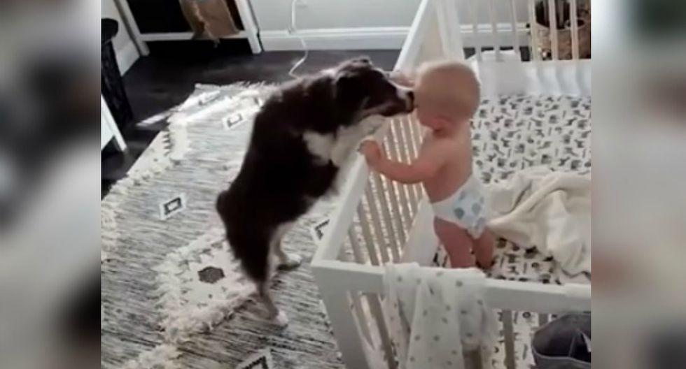 Se viralizó en YouTube el gesto que un perro tuvo al ver a su niño llorar. (Foto: Captura)