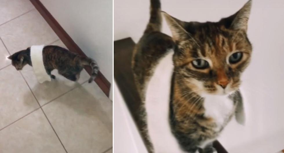 Foto 1 de 5 | La gata ha llamado la atención de miles en redes sociales por usar una bufanda. | Foto: calliepars / TikTok. (Desliza hacia la izquierda para ver más fotos)