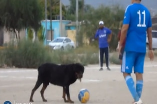 Viral: perro impide ejecutar penal en campeonato de barrio