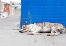 La tierna imagen de una perrita enferma que pide ayuda para ella y sus cachorros