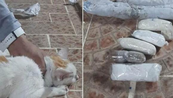 El gatito fue detenido con drogas cuando intentaba ingresar a un establecimiento penitenciario. | Foto: TVNoticias