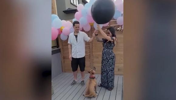 El hilarante momento en que un perro arruina la fiesta de revelación de género de un bebé. (Foto: Caters Clips)