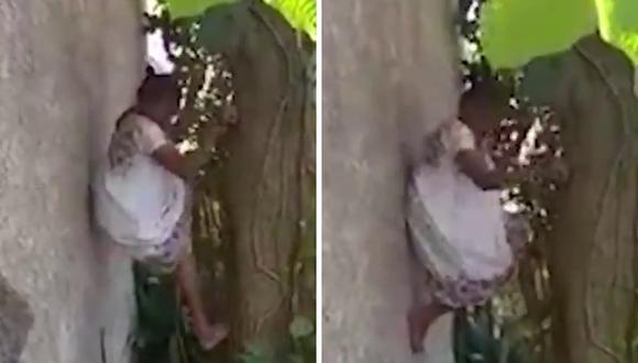 Demetria Euán trabajó por más de tres décadas trepando árboles de chicozapotes para conseguir gomorresina. (Foto: @NovedadesYuc | Twitter)