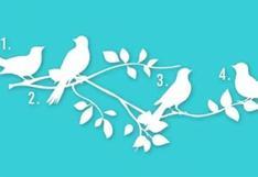 ¿Qué pájaro eliges en la imagen? Tu respuesta puede decirte tu propósito en la vida