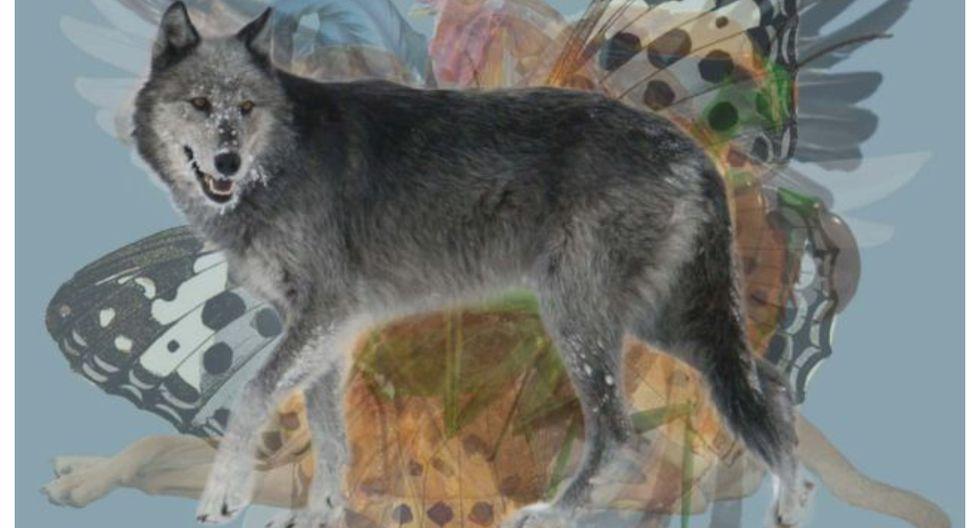 Los animales, como el lobo, tienen rasgos bien definidos que nos atraen. (Foto: web Los40)