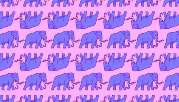 ¿Eres capaz de hallar los elefantes en la imagen? (Foto: Noticieros Televisa)