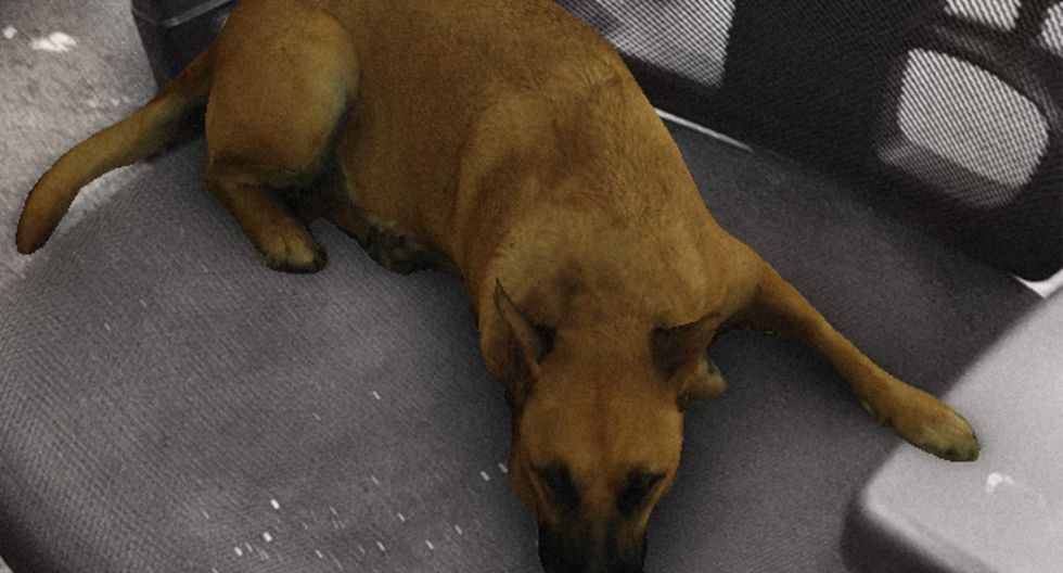 Sasha Dog es el nuevo viral de Instagram, el filtro que te permite colocar un perrito donde desees. (Foto: Instagram)