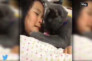 Viral: gatito se desespera por consolar lágrimas de niña