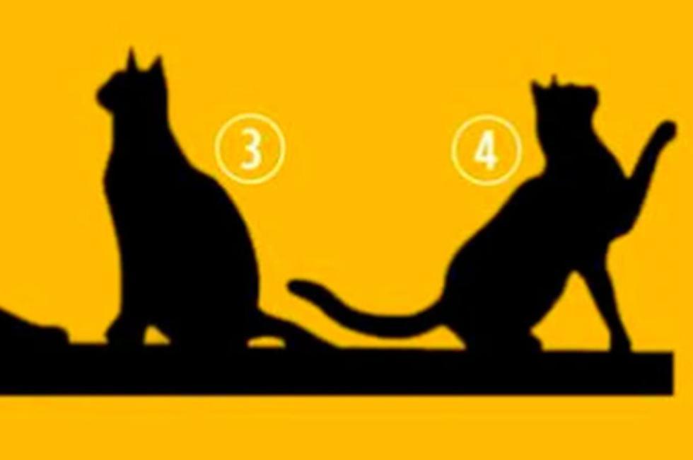 Escoge un gato en la imagen y conoce tu propósito en la vida con este test de personalidad (Foto: Facebook).