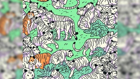 Intenta encontrar a la cebra que está oculta en esta imagen llena de tigres. Solo tienes 30 segundos para lograrlo. |Foto: iProfesional