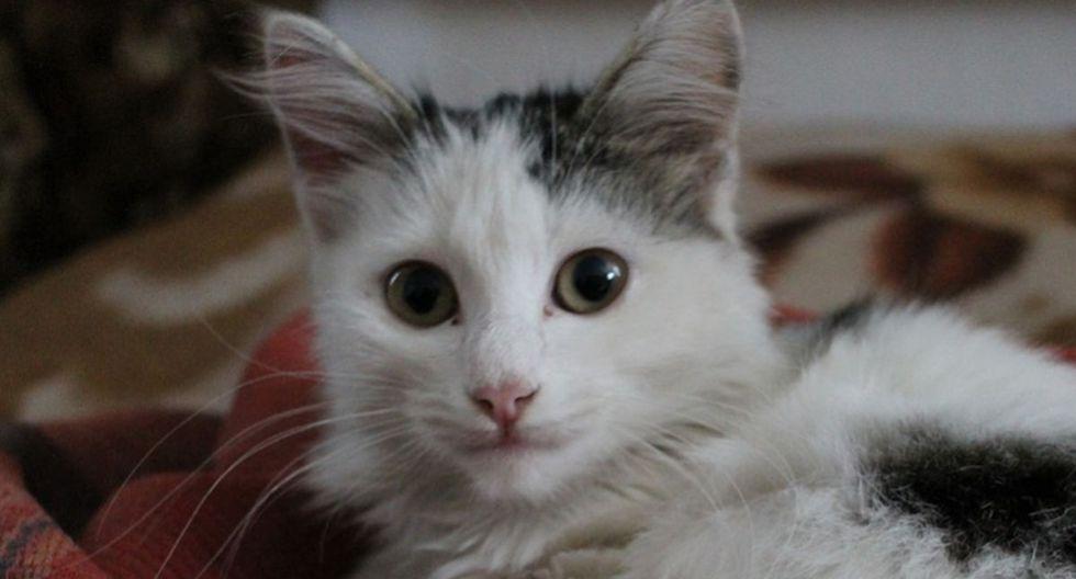 El gato dejó boquiabiertos a propios y a extraños por tener un llamativo comportamiento. (Pixabay)