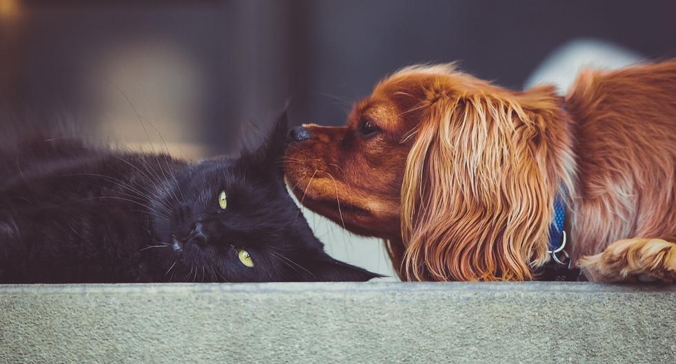 Un perro causó sensación por su singular respuesta al accionar del gato con el que comparte espacio. (Foto: Pixabay/Referencial)