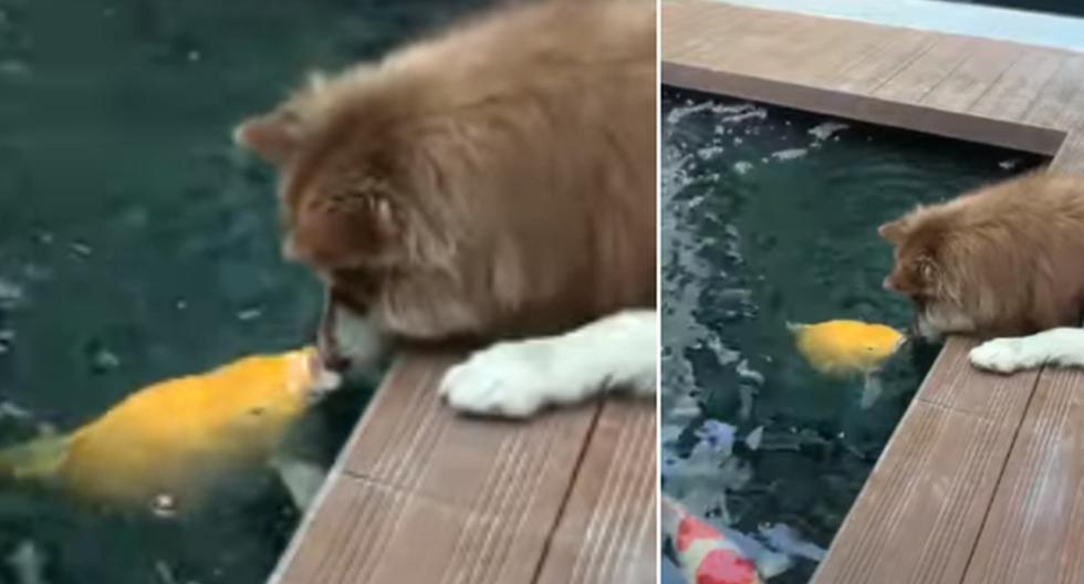 Foto 1 de 3   El perro estaba echado muy cerca de un estanque para estar junto con su amigo pez.   Crédito: ViralHog en YouTube. (Desliza hacia la izquierda para ver más fotos)