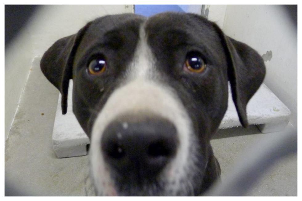 El perro esperó por muchos años que alguien lo adopte. (Foto: Facebook de Saving Carson Shelter Dogs)