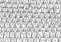 Para superdotados: halla a Batman entre todos estos gatos [FOTO]