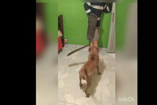 Viral: Feroz perro ataca a adolescente con machete en el hocico