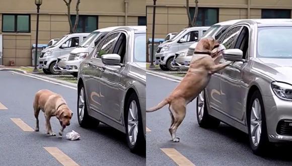 Un video viral muestra cómo un perrito le enseña a una persona a no ensuciar la calle. | Crédito: @woowpets / TikTok