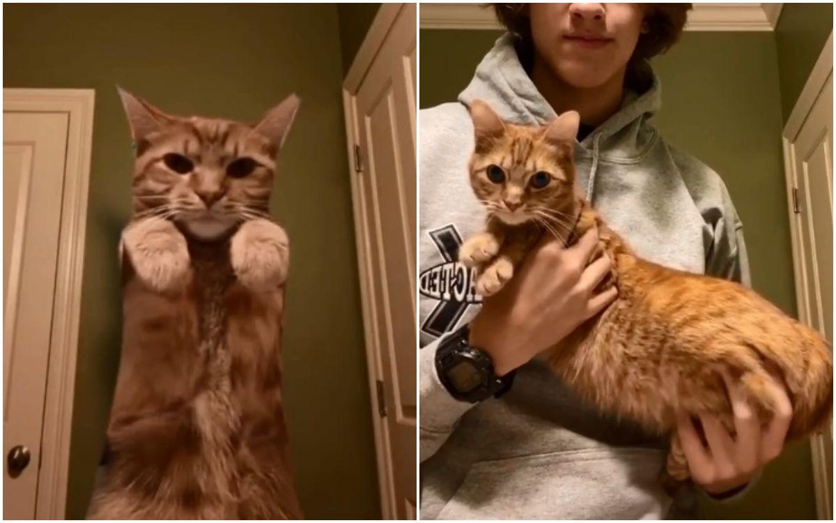 conoce-a-kurt-el-gato-que-es-una-estrella-por-sus-peculiares-pasos-de-baile