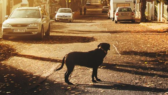 El animal siguió su camino sin mirar atrás. (Foto referencial - Pexels)