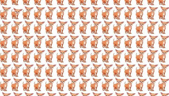 Intenta ubicar al perro diferente en la ilustración. Un acertijo lógico que muy pocos lograron resolver. | Foto: genial.guru