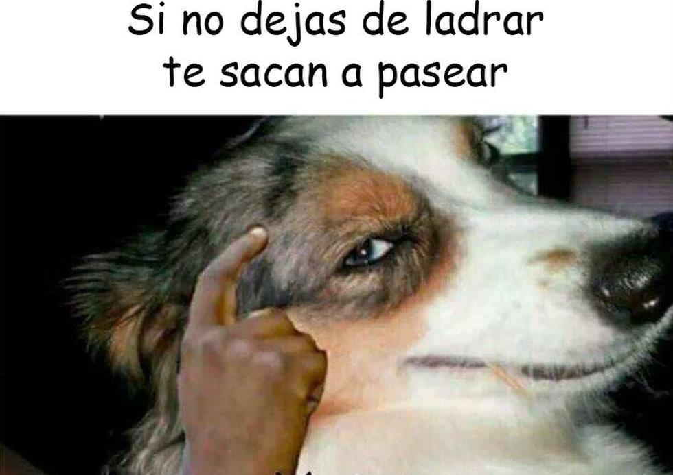 Memes e imágenes para compartir en redes por el Día del Perro 2021 (Foto: Facebook)