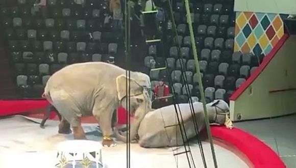 Dos elefantes se pelean en medio de un espectáculo de circo y la impactante escena se vuelve viral. (Foto: РИА Новости / YouTube)