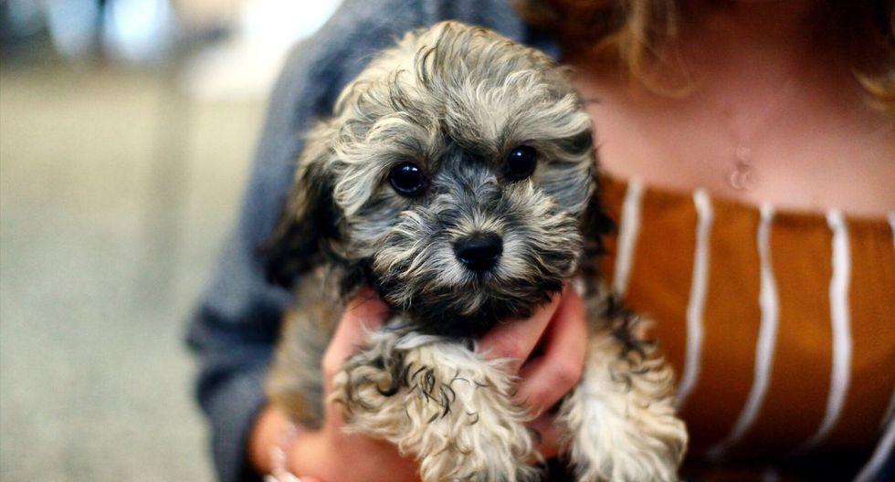 El perro y su pequeño dueño conmovieron a miles. (Foto referencial: Pixabay)