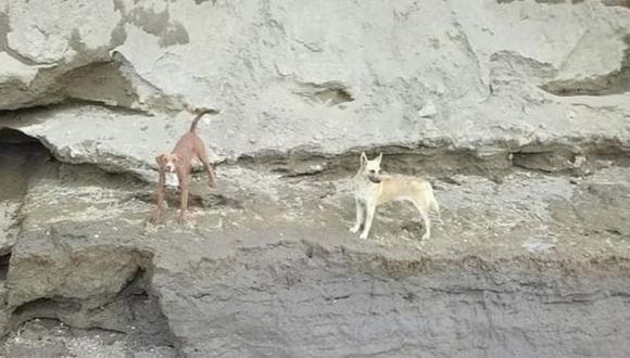 Dos perros estuvieron atrapados dentro del socavón de Puebla y rescatistas lograron salvarlos. (Foto: Twitter)