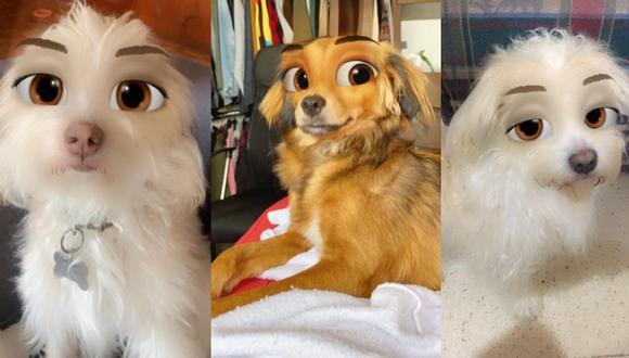 ¿Te gustaría colocarle filtros de Disney a tus mascotas y compartirlas en TikTok? (Foto: TikTok)