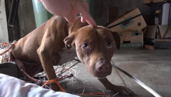 Se viralizó la historia de Eden, un perro de raza pitbull que sorprendió a sus rescatistas por su inesperada actitud tras ser acariciado. (Foto: Hope For Paws - Official Rescue Channel / YouTube)