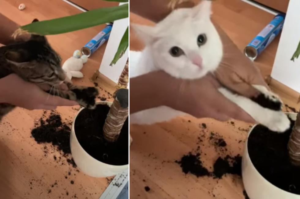 Dos gatos recibieron un peculiar castigo de sus dueños por hacer una travesura. (YouTube: ViralHog)