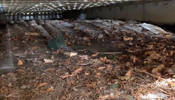 Una familia halló a varios cachorros de zorro que habían quedado atrapados entre el suelo rústico y piso de madera.   Foto: @ainara_1602/TikTok  Foto: Gates Wildlife Control