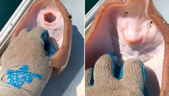 """Esta es la triste verdad detrás del video viral de TikTok donde le hacen """"cosquillas"""" a una manta  (Foto: TikTok)"""