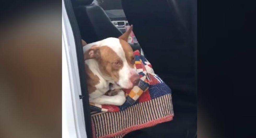 De un momento a otro, un pitbull se subió al auto de unos jóvenes. Cuando se dieron cuenta, este se había 'apoderado' de mucho más que el coche. (Foto: Captura)