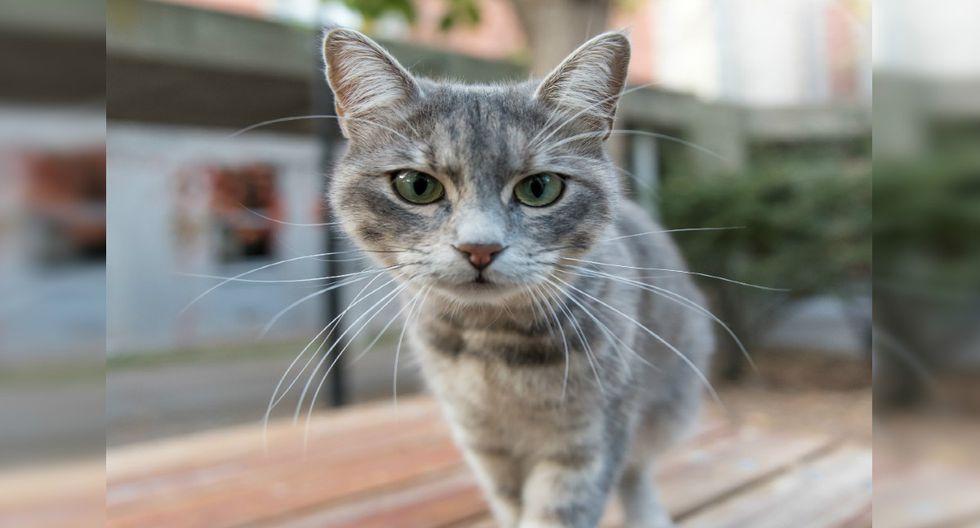 Sunny es un minino que pasó la mitad de su vida en un refugio. Todo cambió cuando conoció a los Richardson. (Pixabay)