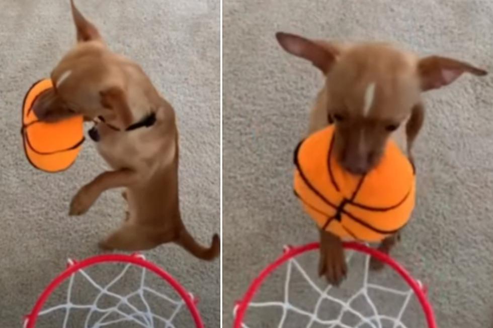 El perro dejó boquiabiertos a todos tras pararse en dos patas para encestar. (YouTube: Rumble Viral)