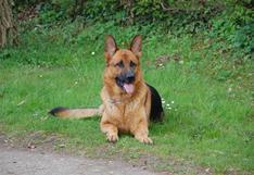 """Un perro adoptado tras 419 días es devuelto al día siguiente porque daba """"demasiado trabajo"""""""