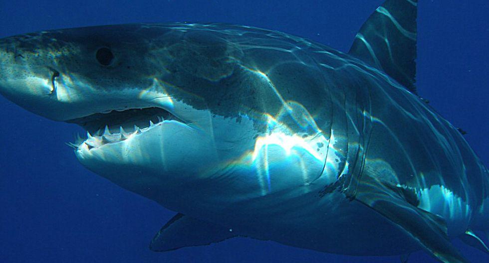Vimy, es el nombre le pusieron a un gran tiburón blanco que fue hallado con una gran mordedura. (Foto: Referencial/Pixabay)